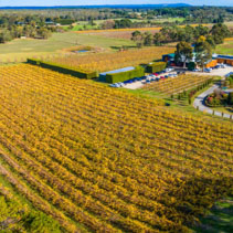 Aerial panorama of beautiful vineyard in autumn. Moorooduc, Victoria, Australia