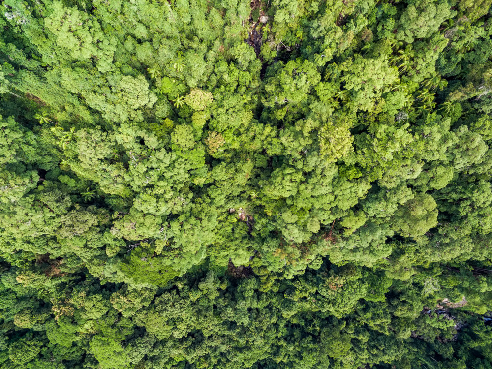 Looking down at tree tops - aerial view