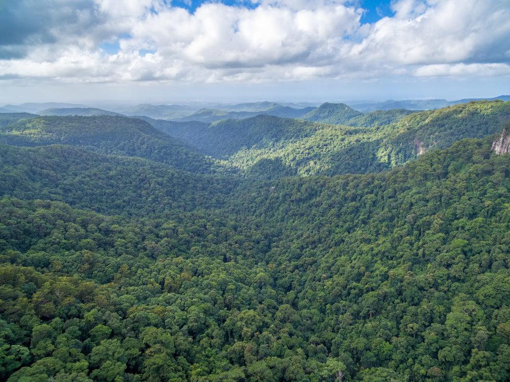 Beautiful landscape of Springbrook National Park, QLD, Australia
