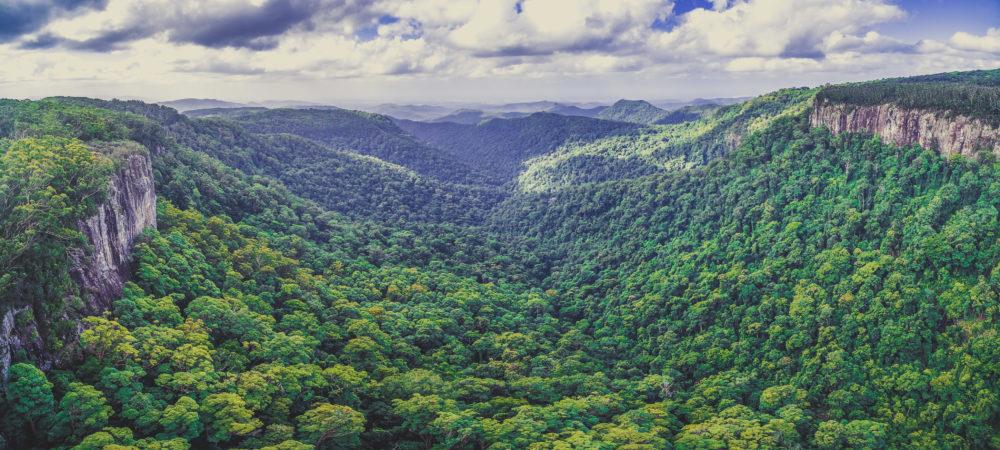 Aerial panorama of rainforest and rugged cliffs. Springbrook National Park, Queensland, Australia