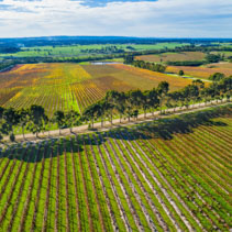 Straight rows of vines and scenic countryside - aerial landscape