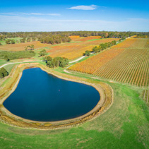 Aerial view of beautiful golden vineyard and pond in autumn. Mornington Peninsula, Victoria, Australia