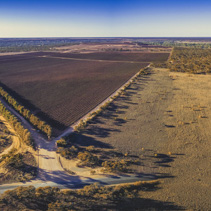 Beautiful vineyards of the Riverland region in South Australia - aerial panorama