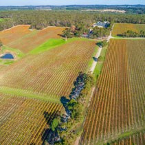 Aerial view of scenic large vineyard and forest in Australia