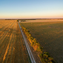 Agricultural fields at sunset aerial view - green and yellow fie