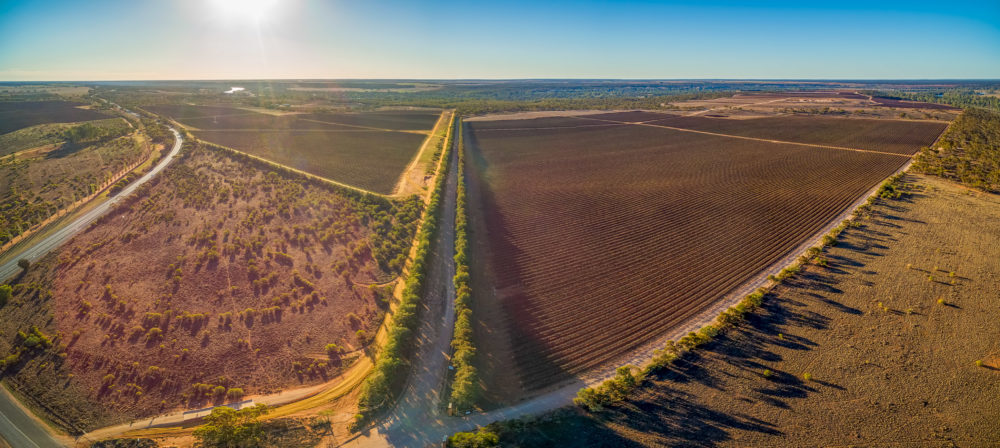 Picturesque vineyards of Banrock Station winery in Riverland, South Australia - aerial panorama