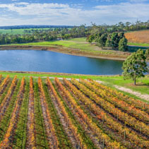 Aerial panorama of vineyard and pond on bright sunny day in fall. Mornington Peninsula, Australia