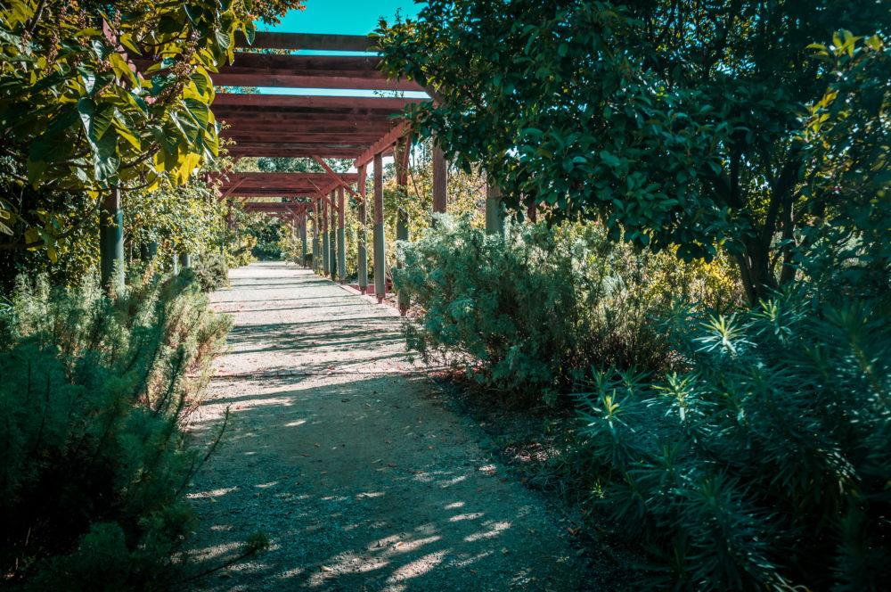 Quiet passage in St. Kilda Botanical Gardens