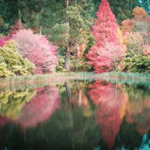 Beautiful trees reflecting in the water in autumn