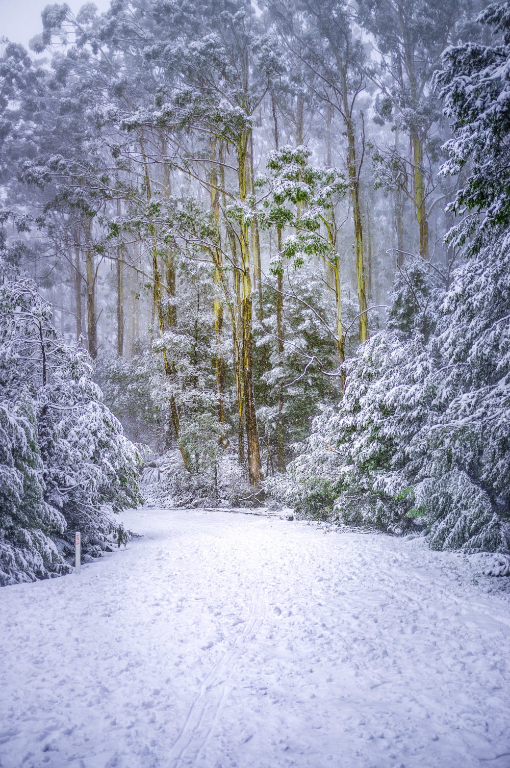 Road covered with snow in eucalyptus forest in Australia