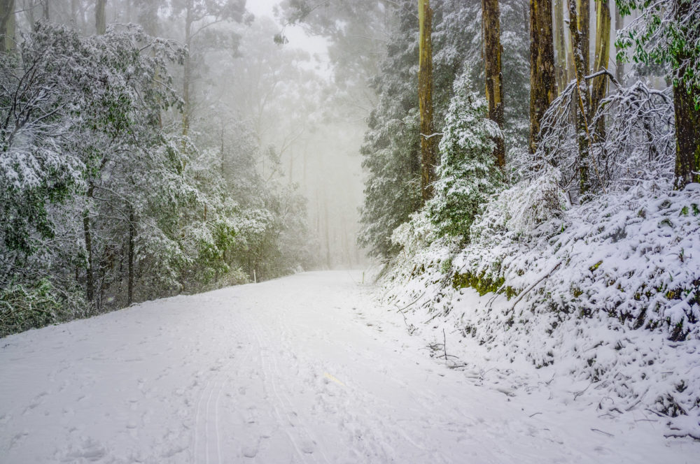 Heavy snowfall on mountain road in Eucalyptus forest