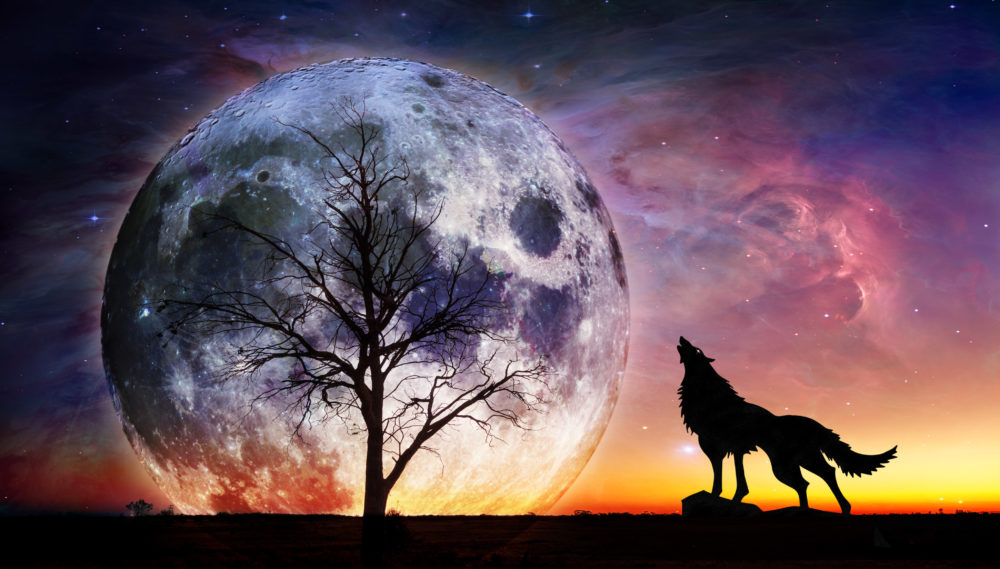 Fantasy landscape - Howling wolf and bare tree silhouettes with huge planet rising behind and galaxy in the sky.