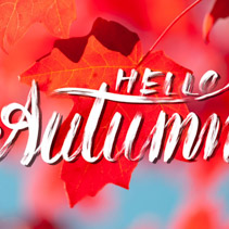 Hello Autumn creative hand lettering on maple leafs background