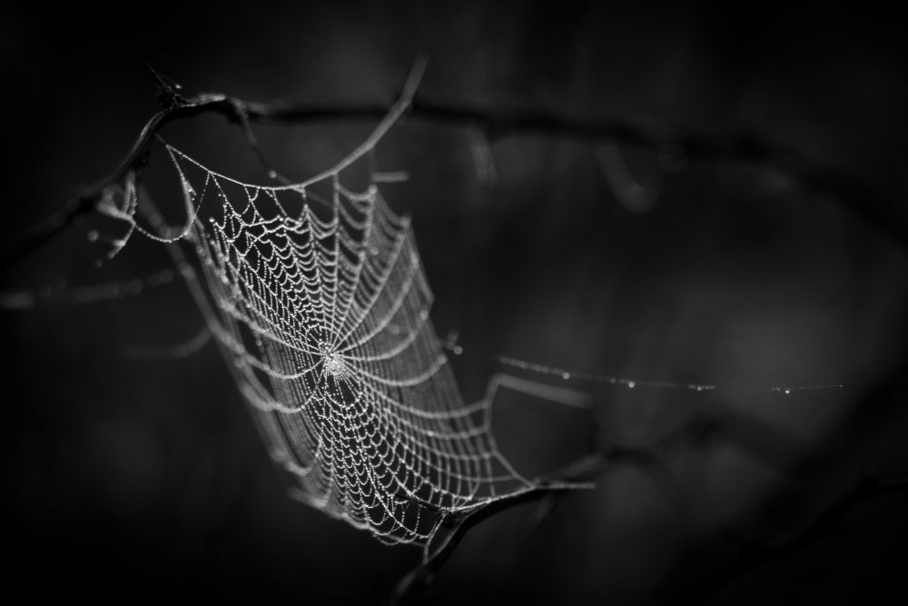 The spider web (cobweb) background
