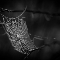 The spider web (cobweb) background