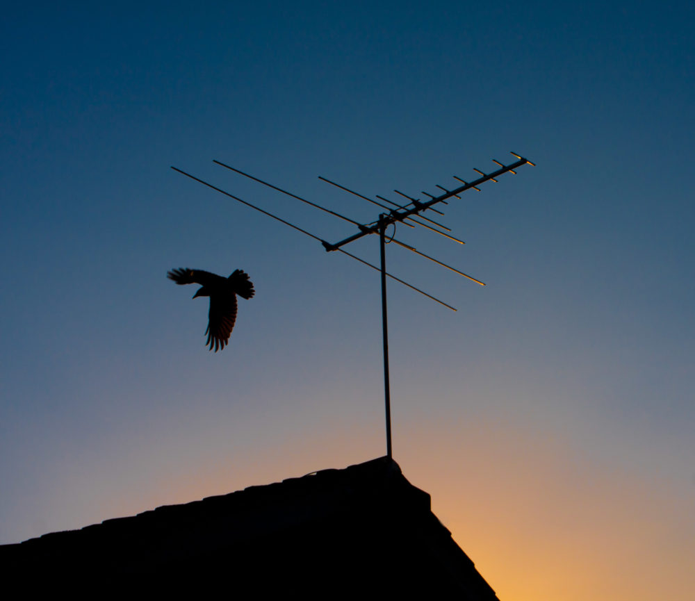 Bird silhouette flying off TV antenna at sunset
