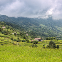 Landscape view of rice terraces in Kathmandu Valley, Nepal