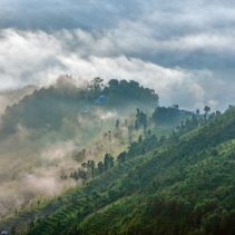 Rice terraces in early morning mist in Kathmandu Valley, Nepal