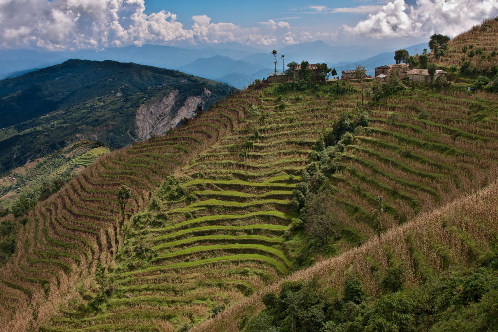 Rice terraces in Kathmandu Valley, Nepal