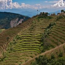 Rice terraces in Kathmandu Valley, Nepal