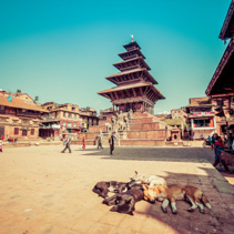 The famous Durbar Square and sleeping dogs