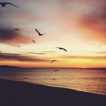 Zen like vintage sunset on a beach with flying seagulls silhouettes. Romantic and tranquil scene