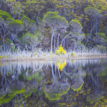 Native Australian trees reflecting beautifully in still water