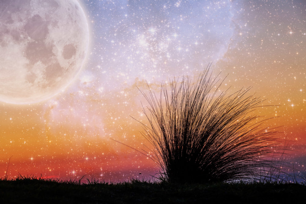 Alien landscape of beach grass flexing in the wind at sunset with galaxy stars and huge planet in the sky. Elements of this image are furnished by NASA