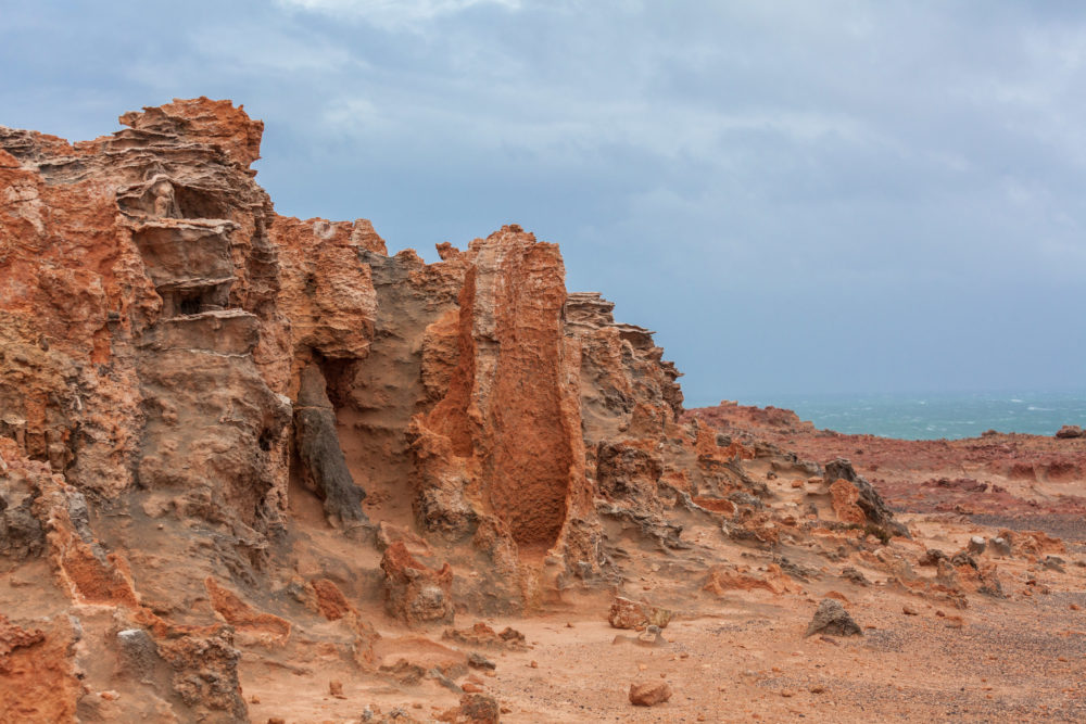 Fragment of the Petrified Forest at Cape Bridgewater, Victoria, Australia