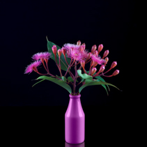 Beautiful bouquet of purple Eucalyptus flowers and buds in a purple bottle isolated on black background
