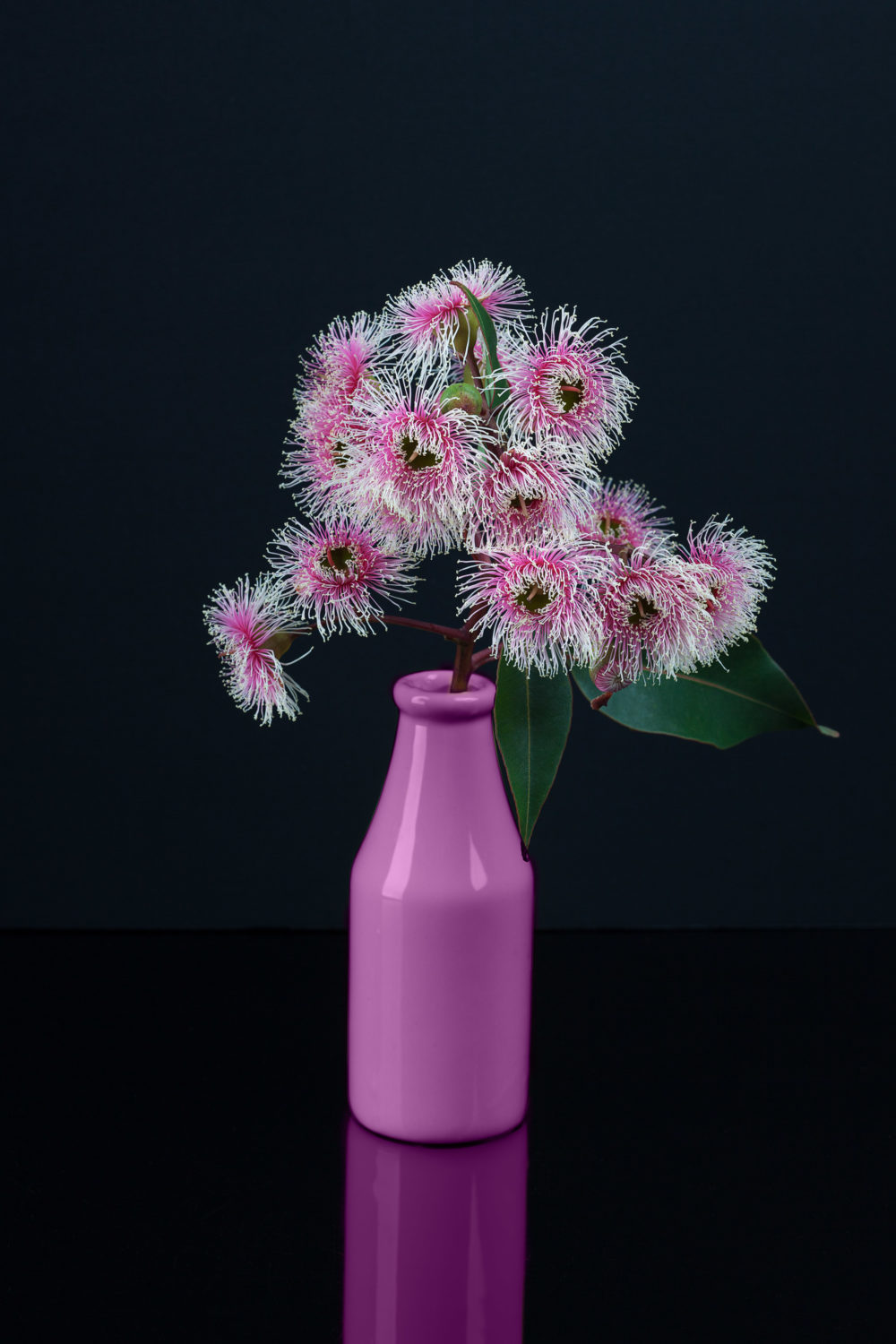 Elegant bouquet of white pink Eucalyptus flowers in a purple bottle isolated on black background