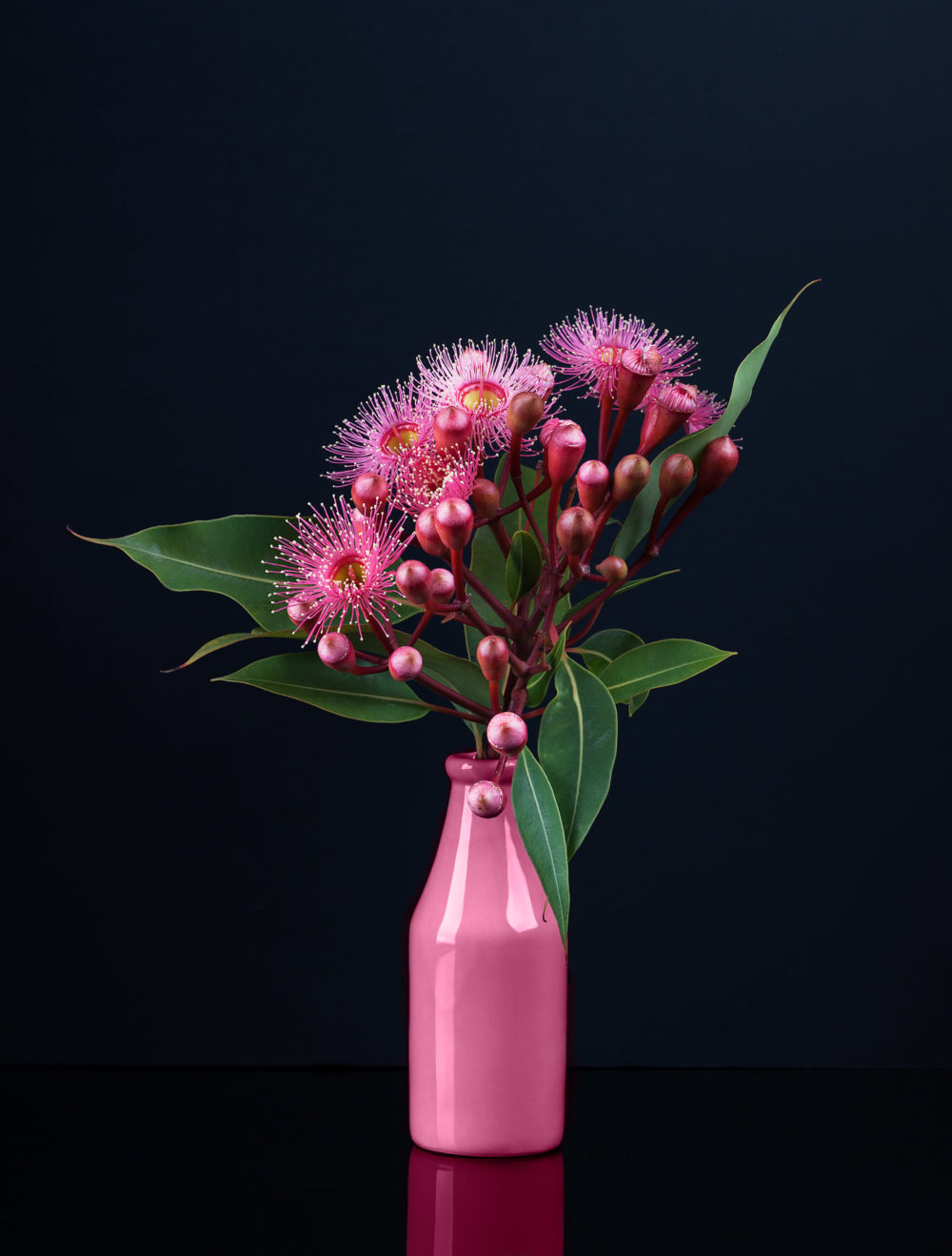 Elegant bouquet of vivid pink Eucalyptus flowers in a pink vase isolated on black background