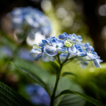 Closeup of beautiful blue flowers on blurred background