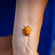 Hibiscus Harlequin Bug crawling up woman hand on blurred background