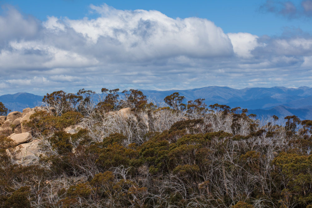Australian Alps and Native Bush