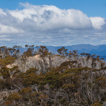 Australian Alps and Native Bush