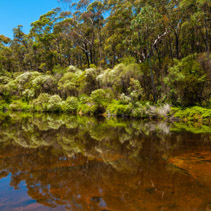 Native Australian vegetation reflecting in calm waters of Kangaroo river.