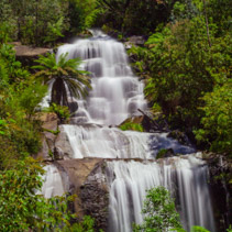 Beautiful Fainter Falls in native Australian Forest