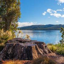 Lake Te Anau with big tree stump on the foreground, Fiordland, South Island, New Zealand