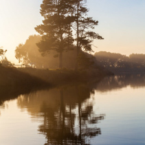 Tall trees reflecting in calm river water at sunrise haze