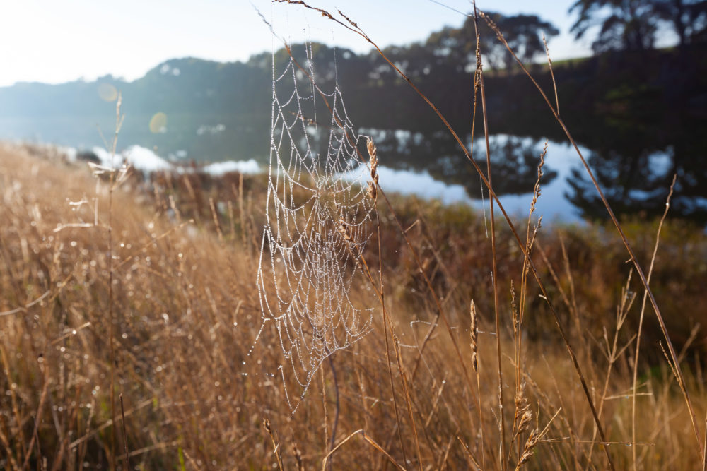 Spider web with dew drops glowing in rising sun