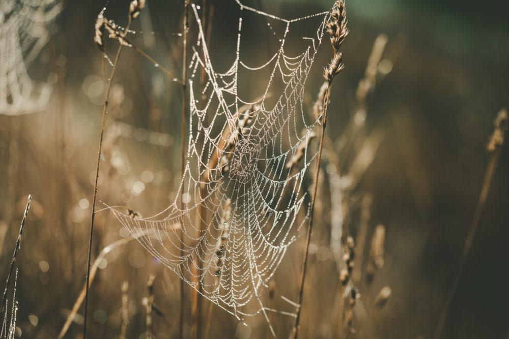 Cobweb with dew drops shining in the sun
