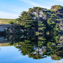 Trees reflecting in calm river water - panoramic landscape