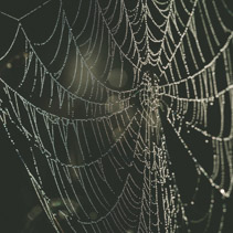 Spider web with dew drops extreme closeup on blurred background