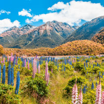 Beautiful landscape with mountains and wild flowers in Fiordland National Park, South Island, New Zealand