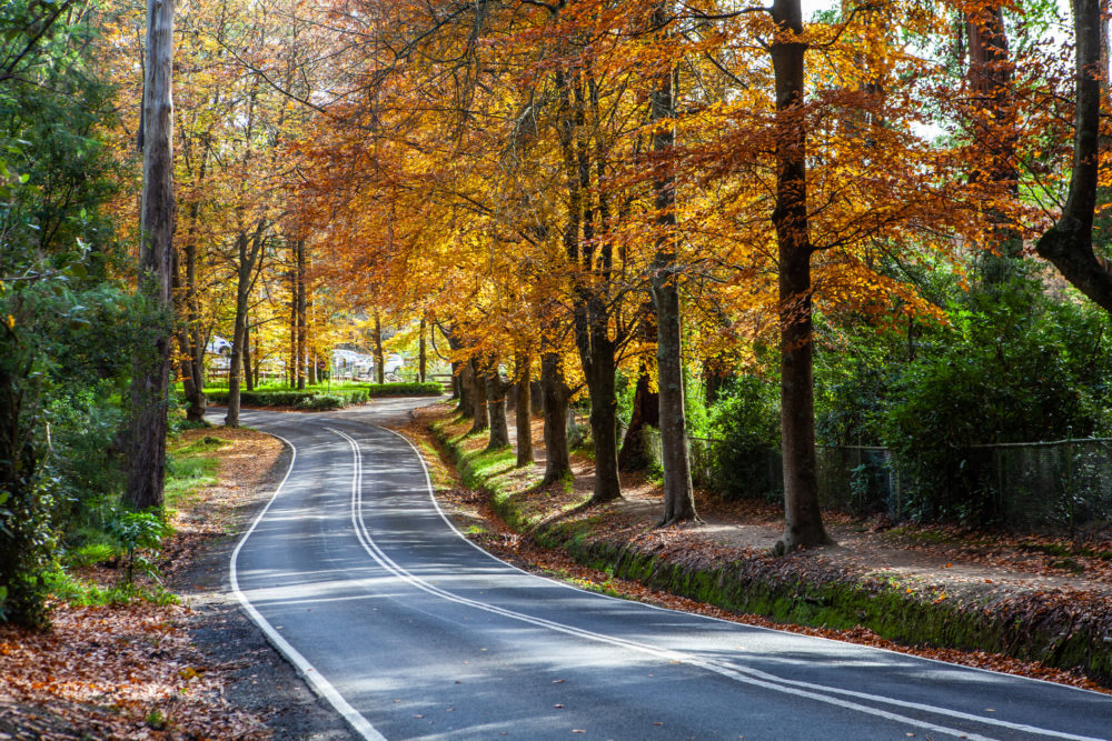 Rural road winding through golden foliage in autumn
