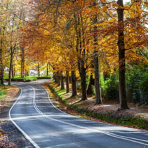Rural road winding through golden foliage in autumn