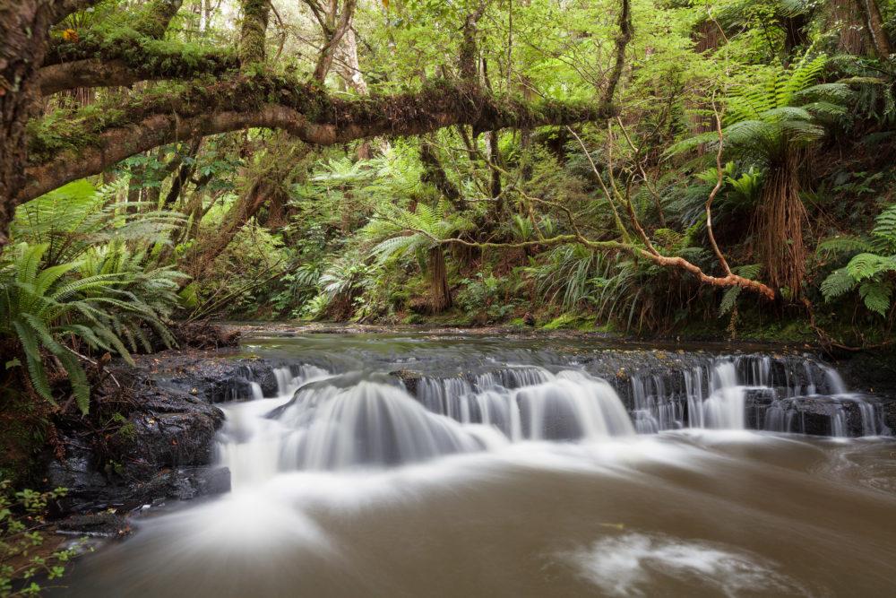Small but beautiful rapid on Purakaunui River, Catlins, South Island, New Zealand