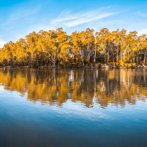 Panorama of trees reflecting in Murray River at sunset