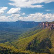 Eucalyptus forest valley, Blue Mountains, Australia.